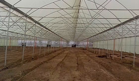 Commercial greenhouse in Sudan